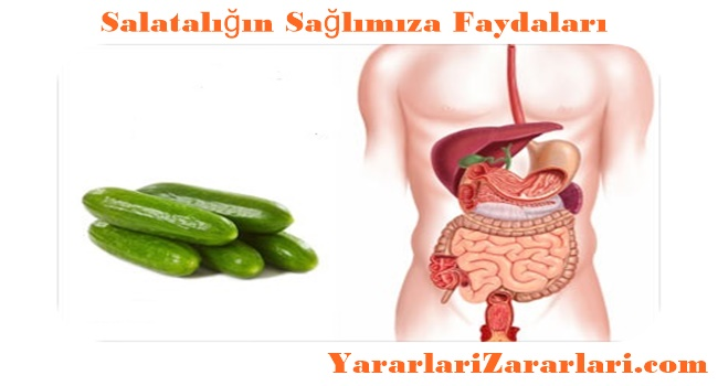 Salatalığın İnsan Sağlığına Faydaları