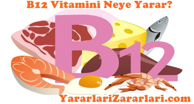 B12 Vitamini Nelere Yarar