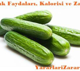 Salatalığın Faydaları, Kalorisi, Zararları